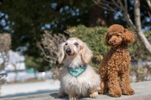老犬と成犬