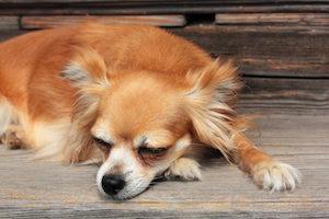 寝ている 犬