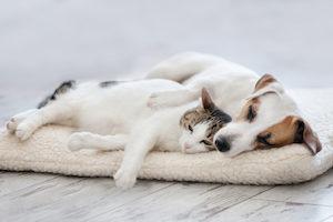 ぐったりする犬と猫
