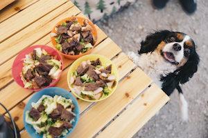 食事を狙う犬