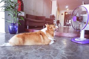 犬 扇風機