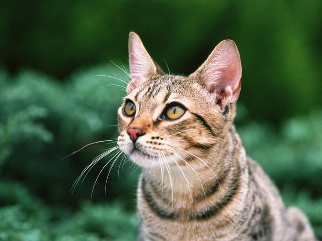 猫白血病ウイルス感染症