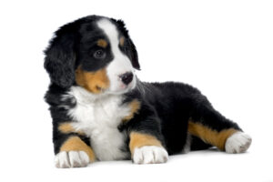 犬の慢性気管支炎